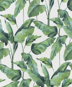 Tropical Banana Plant Wallpaper