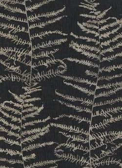 Central Park Fern Tree Wallpaper Black & Gold