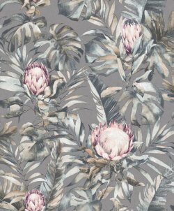 Protea Botanical Flower Wallpaper